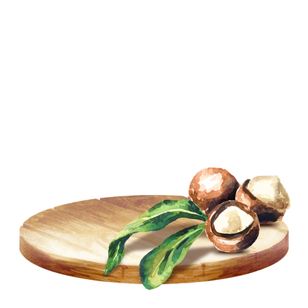 Background with platter and macadamia nuts. Watercolor hand drawn background Stock Photo