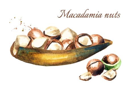 nutshells: Saucer with macadamia nuts. Watercolor hand drawing illustration