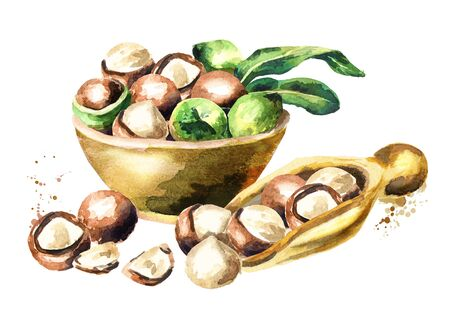 Bowl and spoon with macadamia nuts. Watercolor hand-drawn illustration Stock Photo