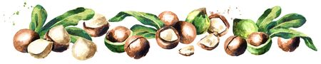 Macadamia nuts panoramic image on white background. Watercolor hand drawing illustration