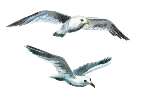 Seagulls. Watercolor hand drawing illustration
