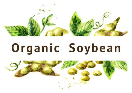Organic Soybean background. Watercolor hand drawn illustration. Stock Photo