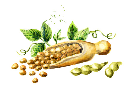 Scoop with soybeans. Watercolor hand drawing illustration Stock Photo