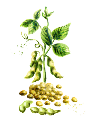 Soy beans and pland vertical composition. Watercolor hand drawn illustration.