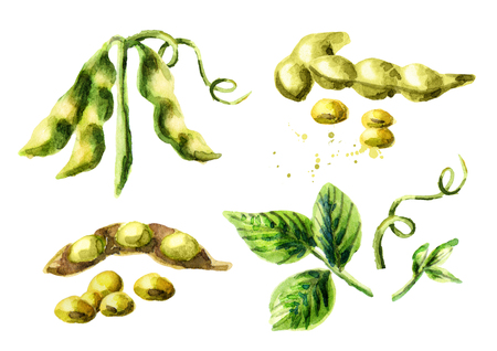 Soy compositions and elements set. Watercolor hand drawn illustration. Stock Photo