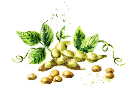 大豆成分を使用。水彩の手描きのイラスト