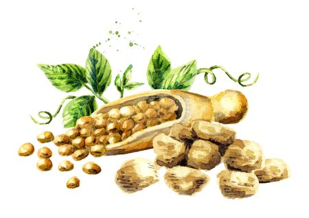 Soy meat with  soybeans. Watercolor hand drawn illustration.