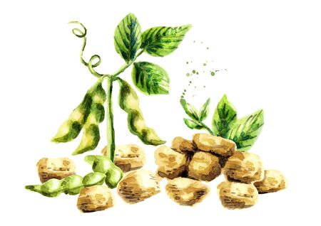 Soy meat with plant and beans. Watercolor hand drawn illustration.