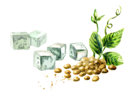 Soy tofu and soybeans with green plant. Watercolor hand drawn illustration. Stock Photo