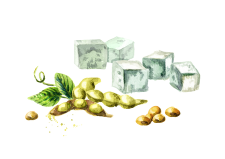 Soy tofu and soybeans. Watercolor hand drawn illustration. Stock Photo