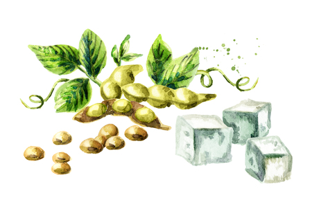 Soybeans and tofu. Watercolor hand drawn illustration.