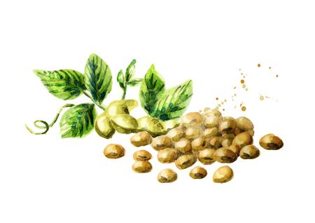 Handvol sojabonen en peulen met groene bladeren Stockfoto