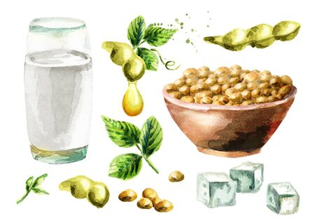 Soy products set with soybeans, milk, tofu and oil. Watercolor hand drawn illustration.