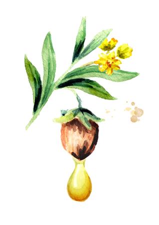 Jojoba oil drop composition. Watercolor illustration