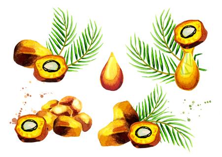 Palm Früchte und Öl-Set. Hand gezeichnete Aquarellillustration