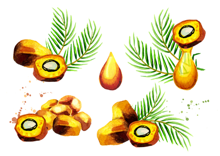 Palm fruits and oil set. Hand drawn watercolor illustration 版權商用圖片