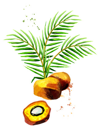 Palm fruits illustration. Hand drawn watercolor composition Stock Photo