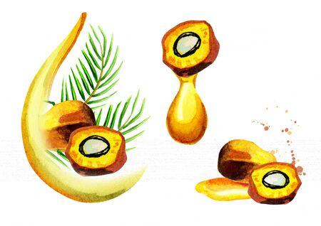 Palm oil set. Watercolor hand drawn illustration
