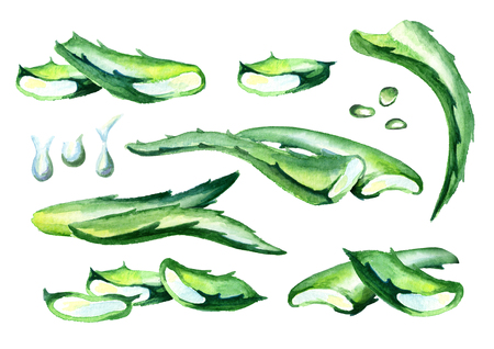 Organic aloe vera compositions set. Watercolor hand drawing illustration Imagens