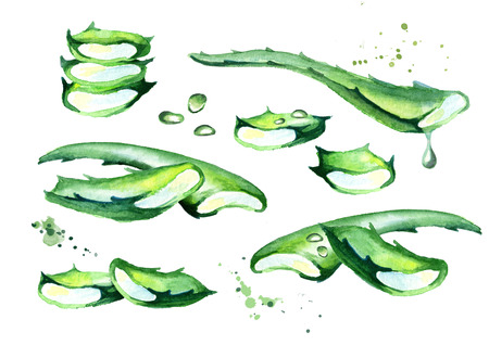 Organic aloe vera set. Watercolor hand drawn illustration