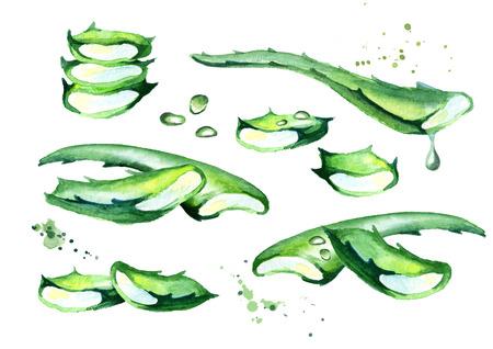 Organic aloe vera set. Watercolor hand drawn illustration