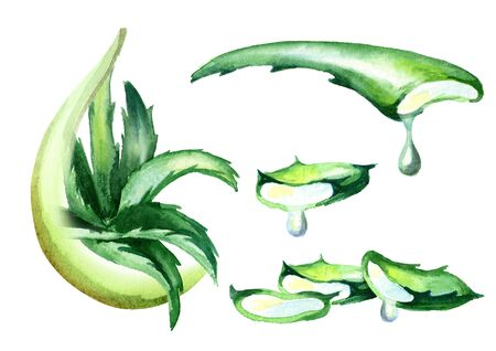 Aloe vera extract set. Watercolor hand drawn illustration