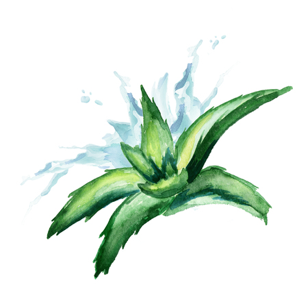 treatment plant: Aloe vera extract splash. Watercolor hand drawn illustration