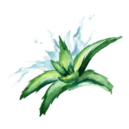 Aloe vera extract splash. Watercolor hand drawn illustration