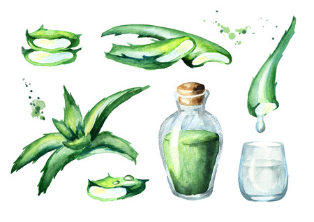 Organic aloe vera extract set. Watercolor hand drawn illustration