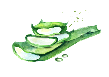 Aloe vera illustration. Watercolor hand-drawn composition