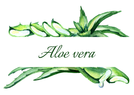 Organic Aloe vera  background. Watercolor