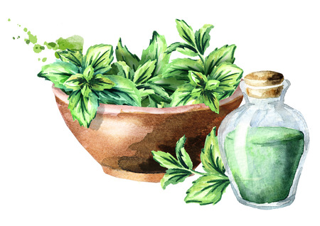 Green fresh mint in the wooden bowl and bottle with mint essential oil. Watercolor hand drawn illustration