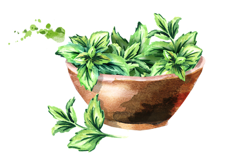 Green fresh mint in the wooden bowl. Watercolor hand drawn illustration