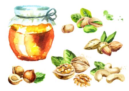 신선한 꿀 및 다른 종류의 견과류가 설정합니다. 수채화 손으로 그린 그림