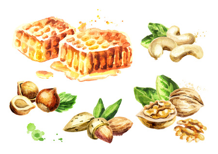 Fresh honeycomb and different kind of nuts set. Watercolor hand drawn illustration