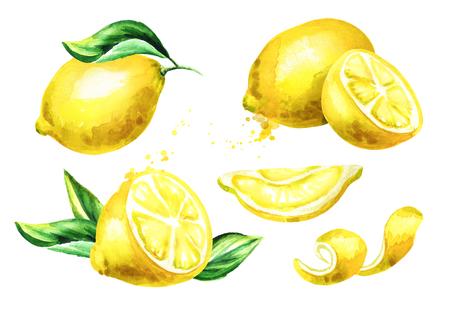 Fresh Lemon fruit compositions set. Watercolor hand drawn illustration