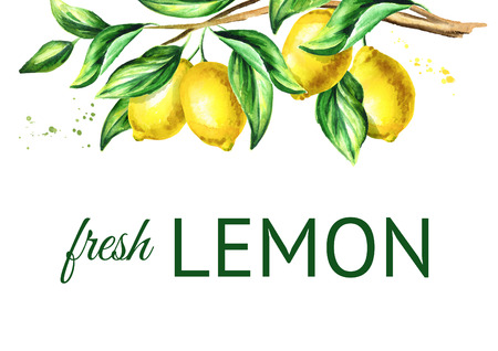 Lemon  branch with fruit and leaves. Watercolor hand drawn horizontal background