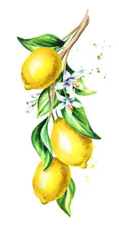 Lemon  branch with fruit and leaves. Watercolor hand drawn vertical illustration - копия