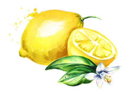 Fresh Lemon  fruit with flower and leaves composition. Watercolor hand drawn illustration