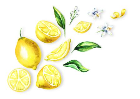 フレッシュレモンの果物、葉や花トップビューの組成物。水彩画の手描きイラスト