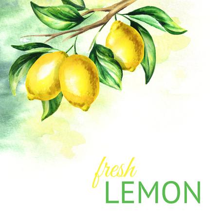 Fresh lemon background. Watercolor hand drawn illustration