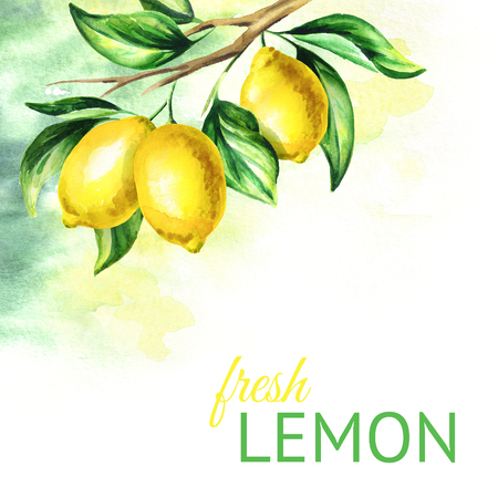 Fresh lemon background. Watercolor hand drawn illustration