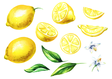 Fresh Lemon fruits and leaves with flowers collection. Watercolor hand drawing illustration