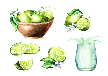 Lime set. Watercolor hand drawn illustration