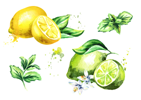 Lime, lemon and mint leaves isolated on white background set. Watercolor hand drawing illustration