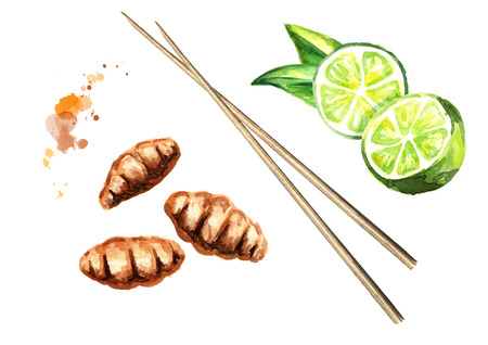 Fried insects wood worm with lime. Asian food, isolated on white background. Top view. Watercolor hand drawing illustration