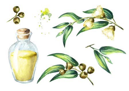 Eucalyptus essential oil set. Isolated on white background. Watercolor hand drawing illustration