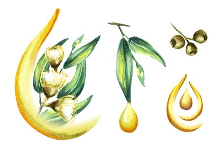 Eucalyptus oil set, isolated on white background. Watercolor hand drawn illustration Stock Photo