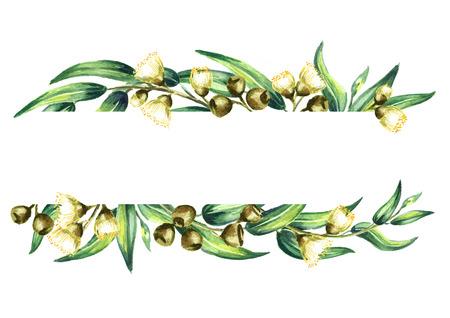 Modello di eucalipto isolato su sfondo bianco. Illustrazione di disegno a mano dell'acquerello