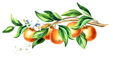 果物と葉のオレンジの枝。 水彩画描き下ろし水平イラスト 写真素材